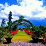 Wisata Bersama Keluarga di Kebun Mawar Situhapa, Garut