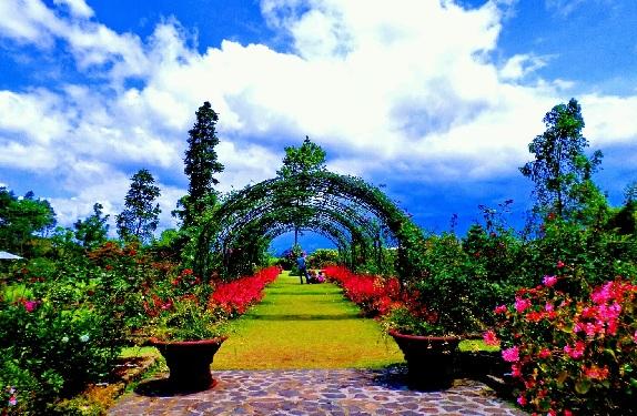 Wisata Bersama Keluarga Di Kebun Mawar Situhapa Garut Reresepan