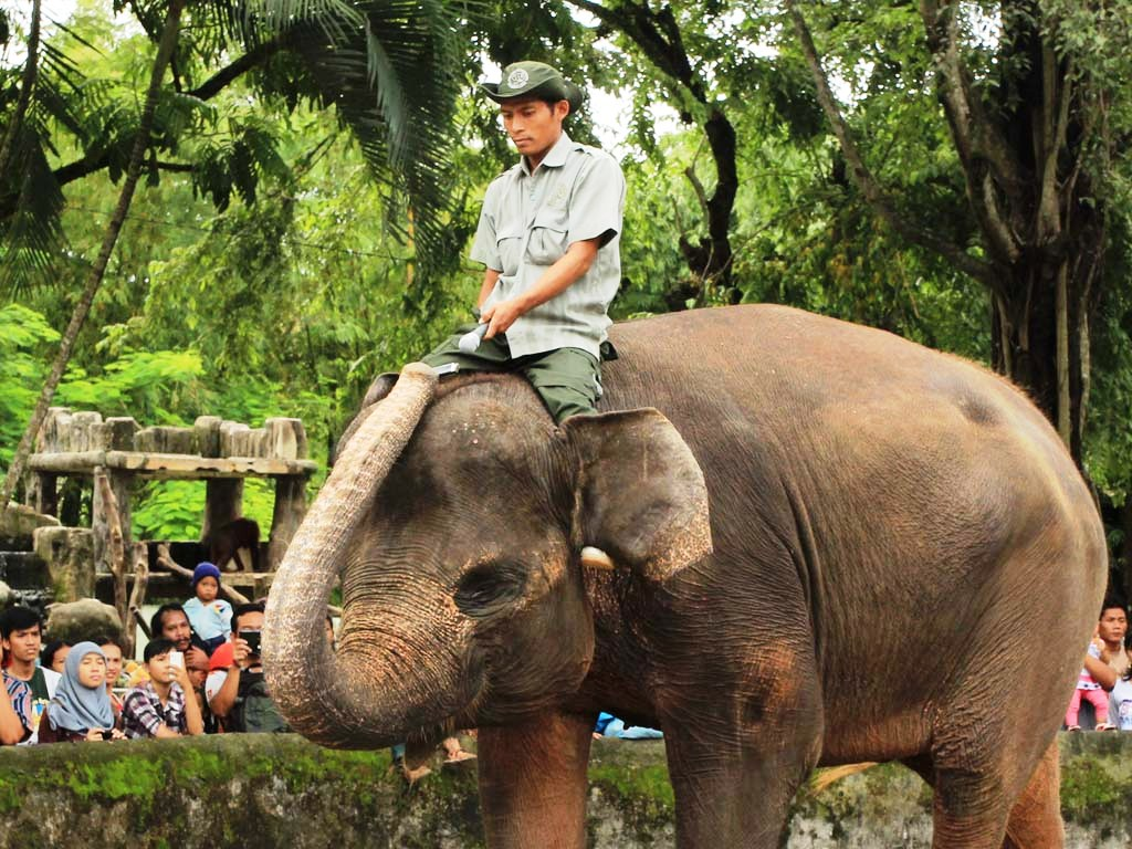 Atraksi gajah Kebun Binatang Gembira Loka Yogyakarta