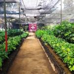 Kampung Coklat Blitar, Wisata Edukasi yang Lagi Booming di Blitar