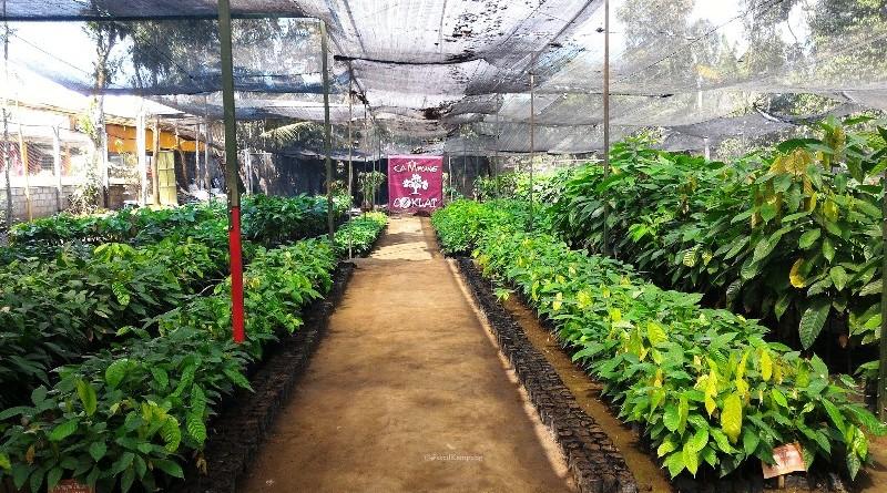 Kebun di Kampung Coklat Blitar