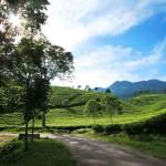 Kebun Teh Karanganyar, Pilihan Wisata Murah di Solo