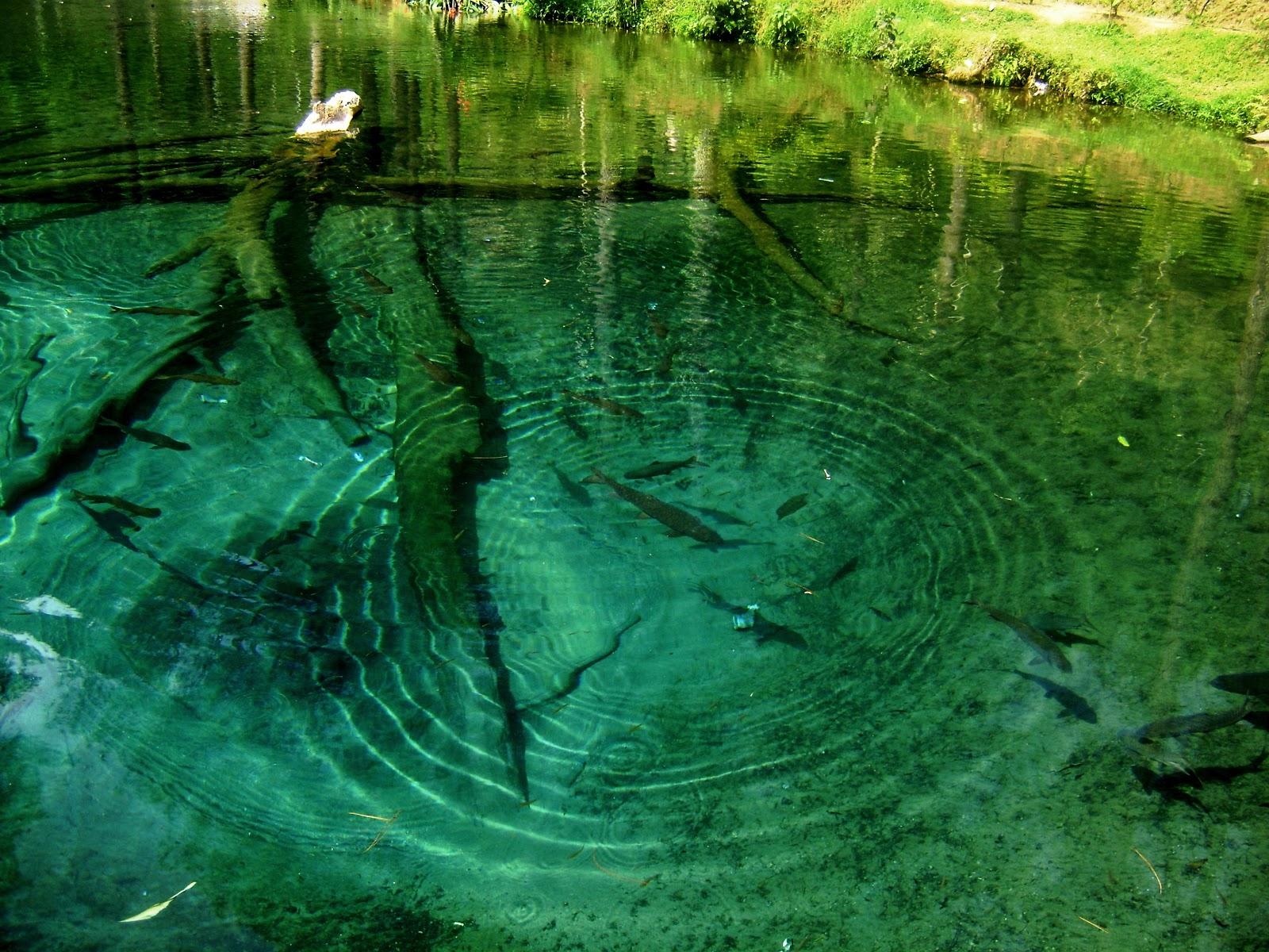 ikan dewa di telaga Rambut Monte Blitar via