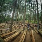 Hutan Pinus Mangunan Imogiri, Tempat Pas untuk Cari Ketenangan