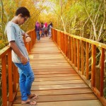 Hutan Mangrove Ujungpangkah, Pilihan Wisata Alam Murah Meriah di Gresik