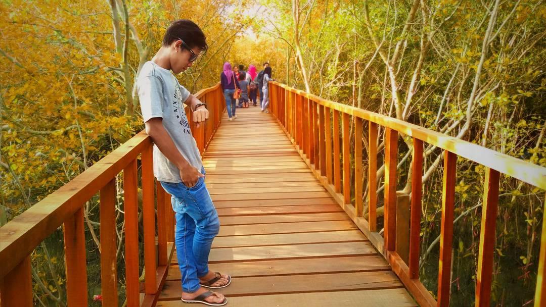hutan mangrove ujungpangkah