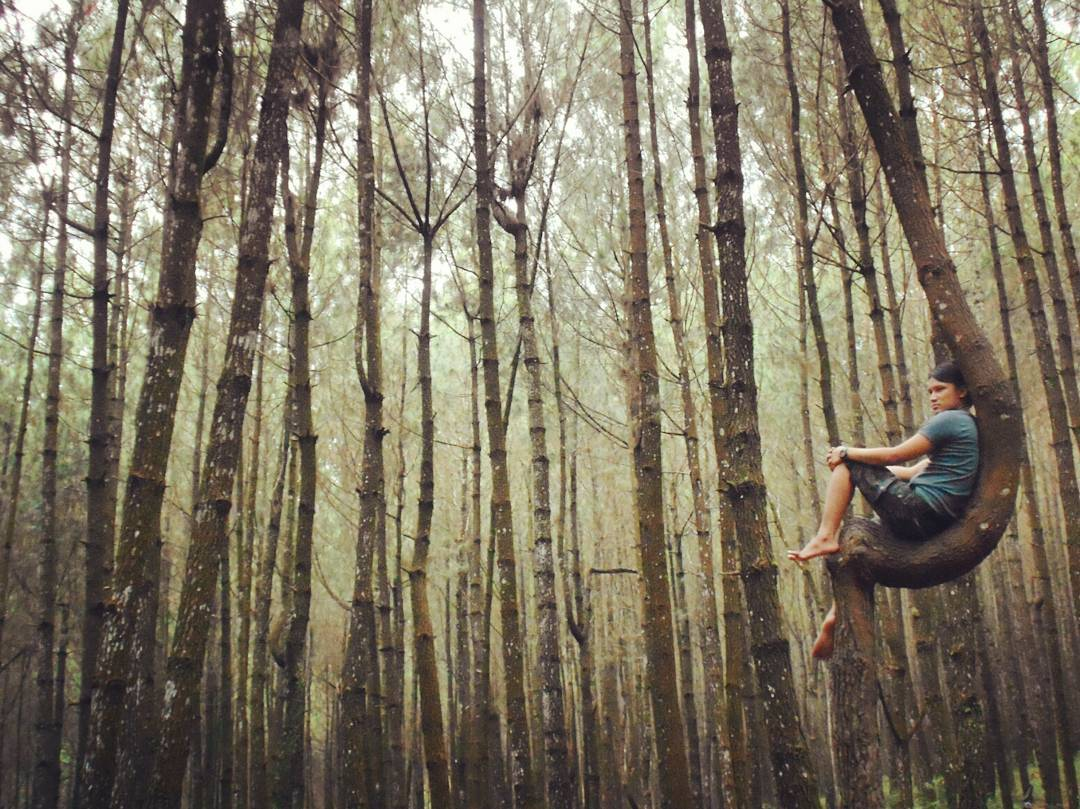Top Selfie Pinusan Kragilan Wisata Hutan Pinus Di Magelang Jawa