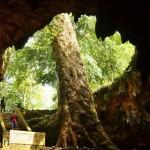 Gua Rancang Kencono Gunungkidul, Wisata Gua Bersejarah di Yogyakarta
