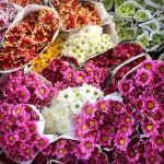 Pasar Bunga Bandungan – Tempat Cuci Mata dan Berburu Bunga Murah di Semarang
