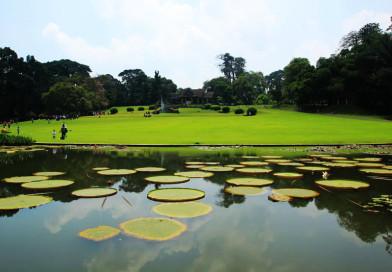 5 Tempat Wisata Liburan Lebaran Terbaik di Bogor yang Asyik untuk Keluarga
