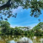 Kebun Bibit Wonorejo, Wisata Murah Meriah yang Edukatif di Surabaya