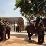 Maharani Zoo dan Goa Maharani, Objek Wisata Terfavorit di Lamongan