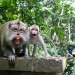 Monkey Forest Ubud, Wisata Wajib Bermain-main dengan Monyet di Bali