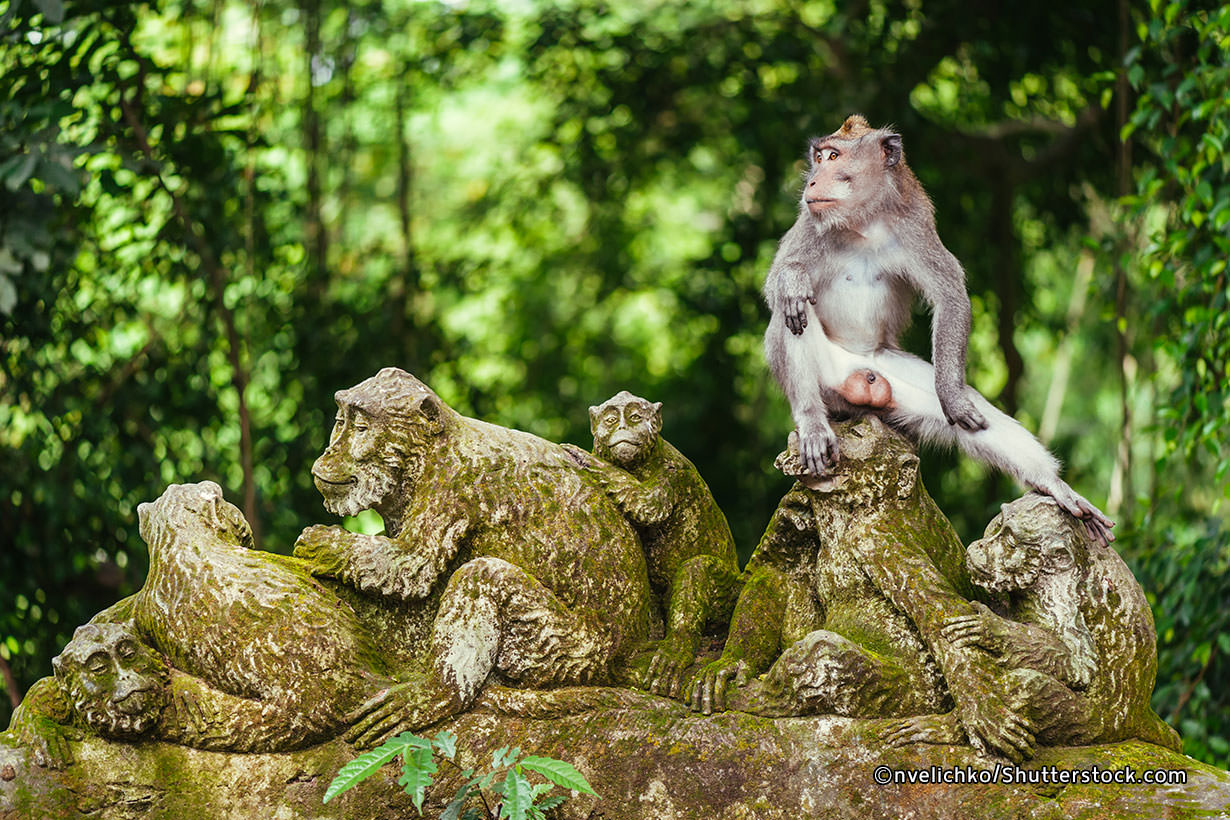 Monkey Forest Ubud