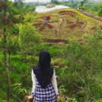Wisata Batu Flower Garden, Kebun Bunga dengan Suasana yang Instagramable