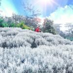 Padang Bunga Kasna Karangasem, Wisata Instagramable di Hamparan Bunga Pemberian Dewa di Bali