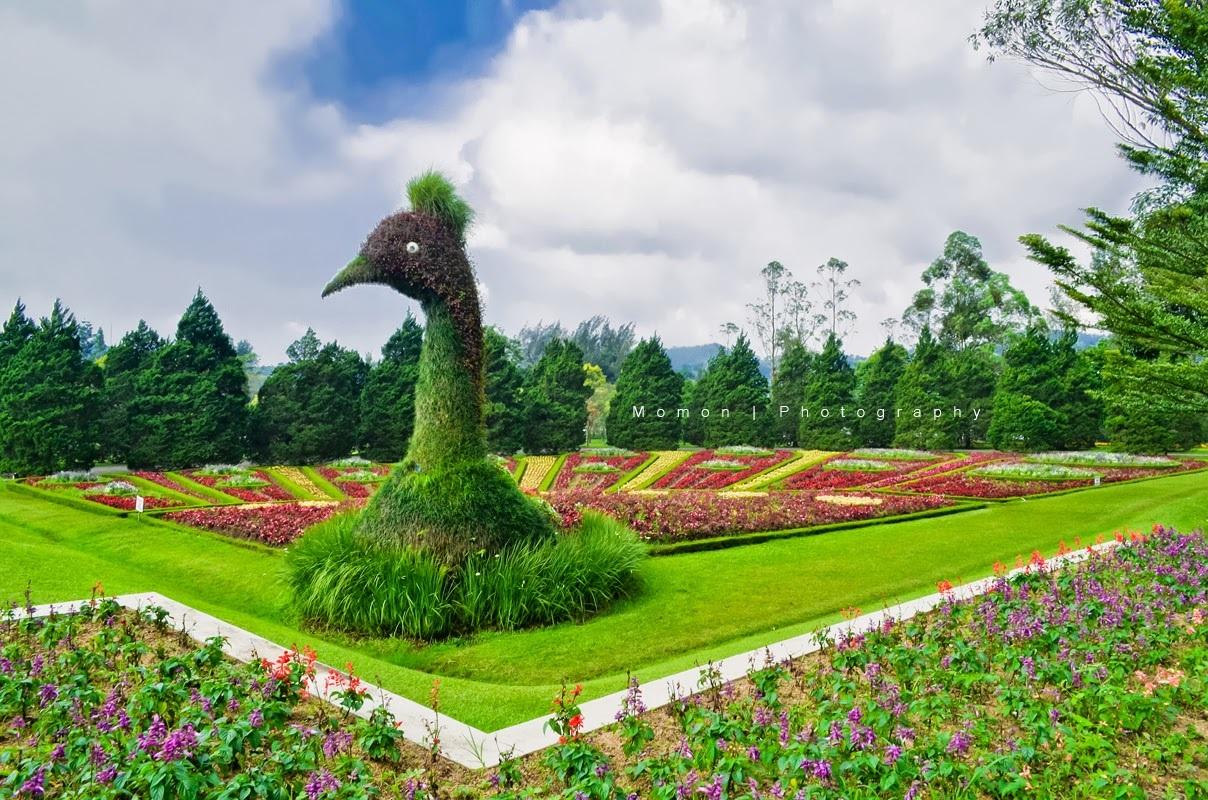 Bunga satwa raksasa