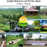 Obyek Wisata Gunung Mas Puncak Cianjur, Wiasata Agro