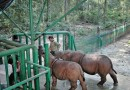 Obyek Wisata Kandang Badak di Cipanas Cianjur