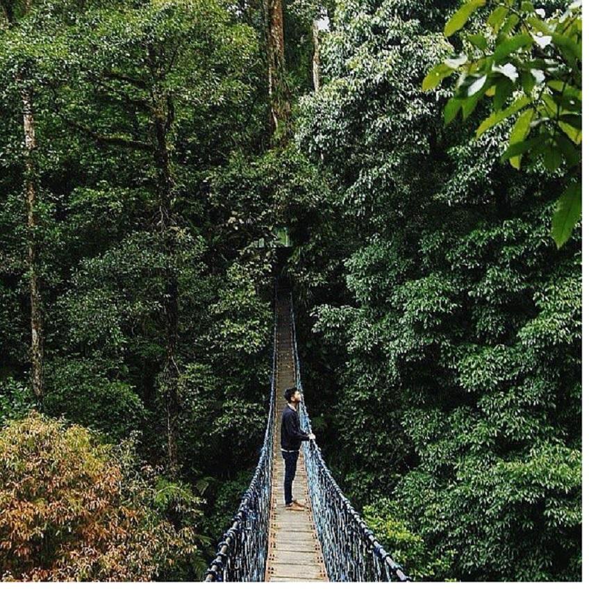 Tarif Masuk Taman Nasional Gunung Halimun Salak