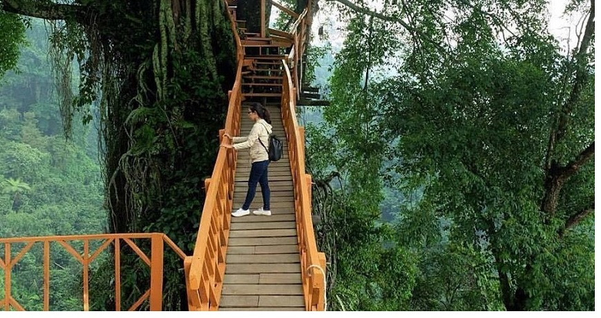 Harga Tiket Masuk Rumah Pohon dan Jembatan Kayu Gantung Curug Ciherang Jonggol