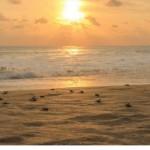 Pantai Muara Cipanarikan, Pesona Keindahan Pantai Tersembunyi di Ujung Genteng