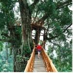 Rumah Pohon Dan Jembatan Kayu Gantung Curug Ciherang Jonggol
