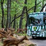 Taman Safari Indonesia 2 Prigen, Pilihan Wisata Edukatif Bersama Keluarga yang Menyenangkan