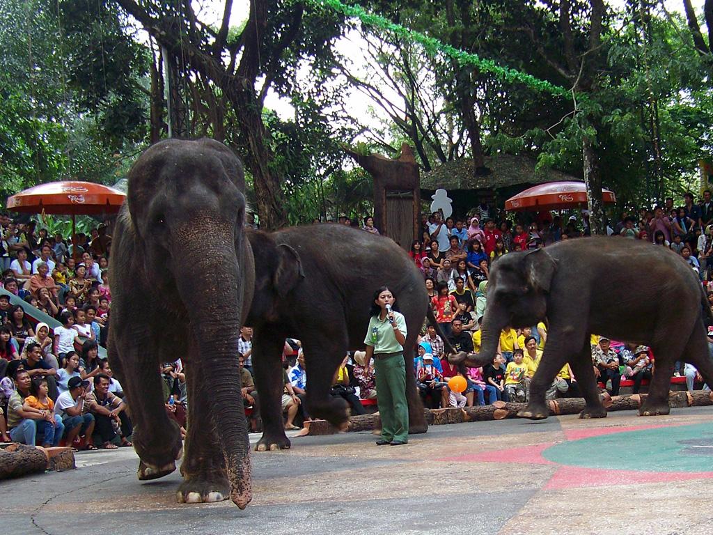 Taman Safari Indonesia 2 Prigen