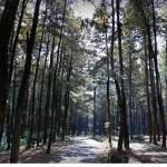 Gunung Pancar, Tempat Wisata Alam Yang Masih Alami