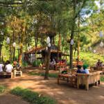 Hutan Pinus Ledok Ombo, Pilihan Tepat Liburan Keluarga dengan Suasana Alami di Malang