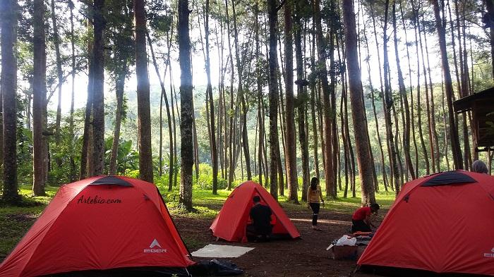 Hutan Pinus Ledok Ombo