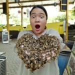 Rimba Raya Bee Farm Malang, Wisata Edukatif Melihat Peternakan Lebah lebih Dekat