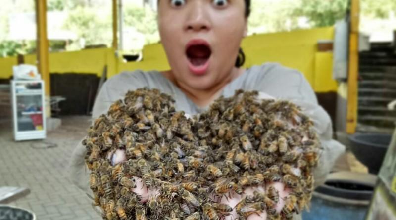 Rimba Raya Bee Farm