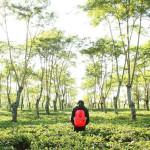 Merasakan Ketenangan di Kebun Teh Wonosari Malang yang Menyegarkan
