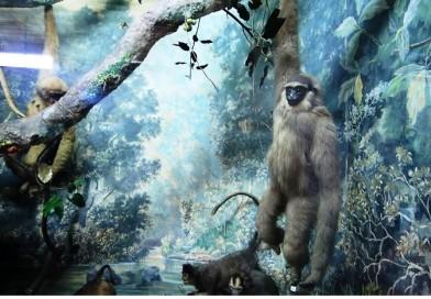 Museum Zoologi, Wisata Edukasi Untuk  Anak-anak Mengenal Berbagai Jenis Hewan