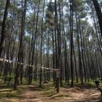 Hutan Pinus, Tujuan Wisata Batu Kuda Gunung Manglayang